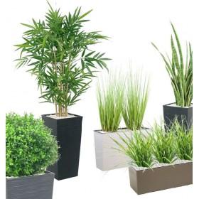 Plantes vertes d'intérieur - Clen