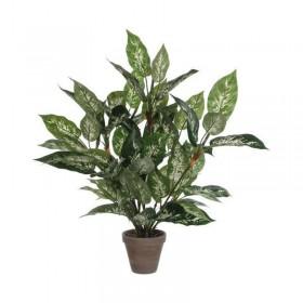 Plante artificielle Dieffenbachia 70cm - Hotelpros
